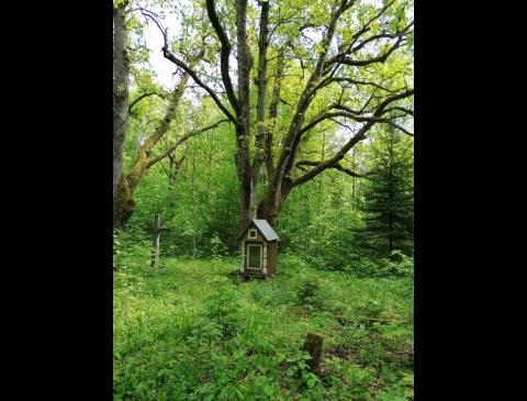 Vaineikių k. II senosios kapinės, vadinamos Maro, Sontakio, Švedų kapeliais