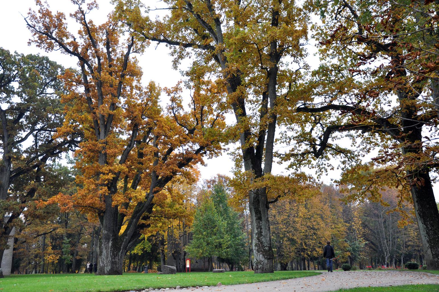 Kretingos dvaro parko alėja